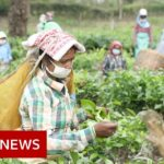 Coronavirus: The fears of India's tea workers in lockdown – BBC News