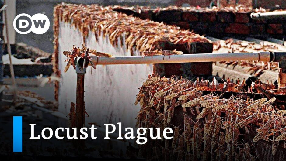 India and Pakistan face worst locust plague in 30 years   DW News