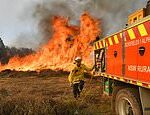 Queensland firefighters beg for COVID-19 funds to employ 350 firies ahead of the bushfire season