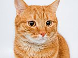 Drug for CATS may help fight coronavirus in humans, study finds