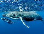 Whales, dolphins and seals are 'highly susceptible' to coronavirus infection