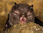 New coronavirus is discovered in BRITISH BATS by ecology undergraduate, 22