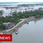 Why the world's largest mangrove forest is sinking – BBC News